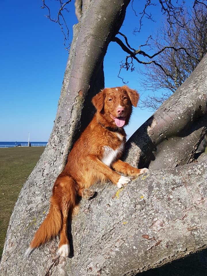 Denna bild har ett alt-attribut som är tomt. Dess filnamn är Lexie-i-träd.jpg